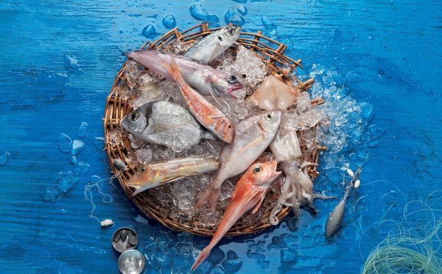 Peix de la Llotja de Vilanova i la Geltrú