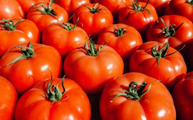 Els tomàquets són un aliment versàtil i molt saludable
