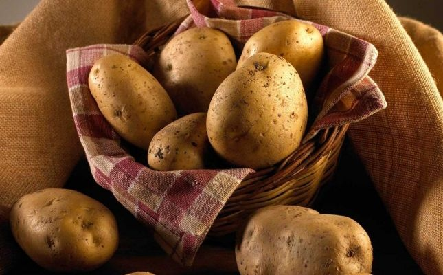IGP Patates de Prades