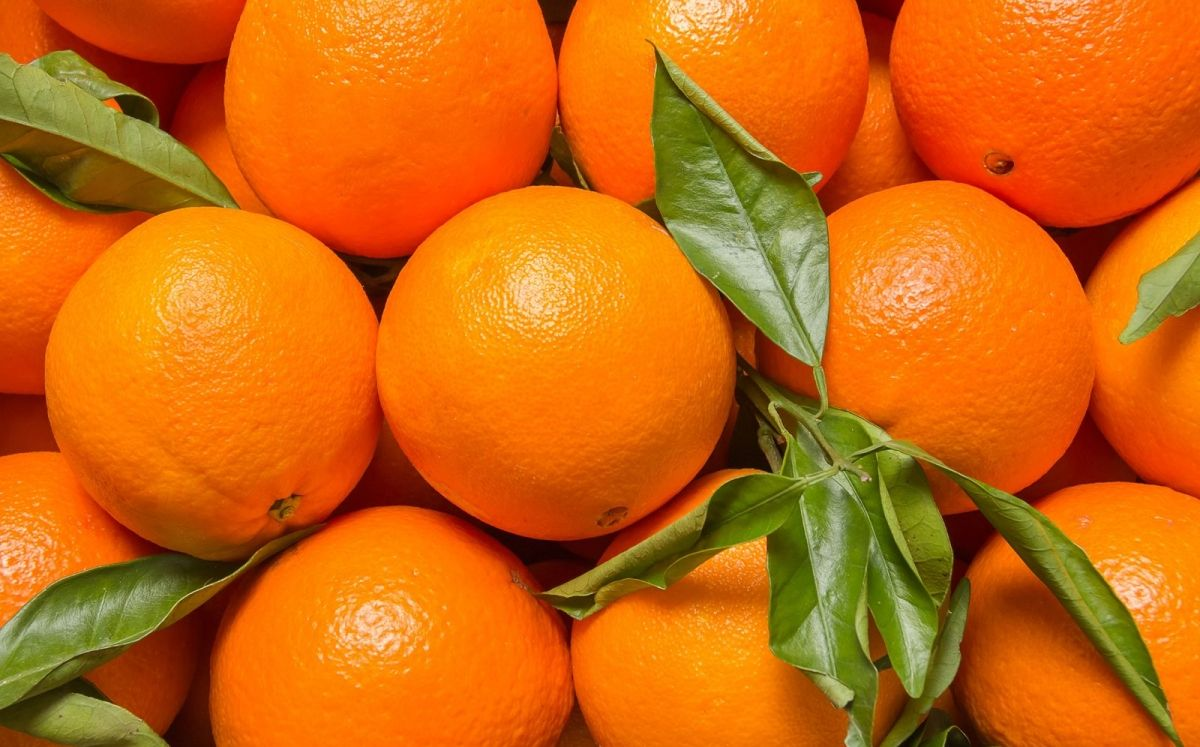 Taronja Valencia Late