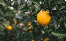 Taronja Navel