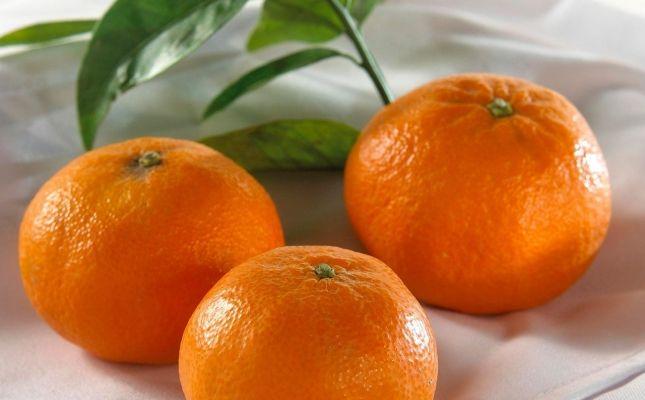 IGP Clementines de les Terres de l'Ebre