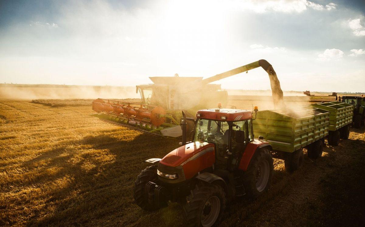 L'agricultura és un pilar fonamental d'Avià