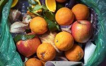 Taronges i pomes a les escombraries